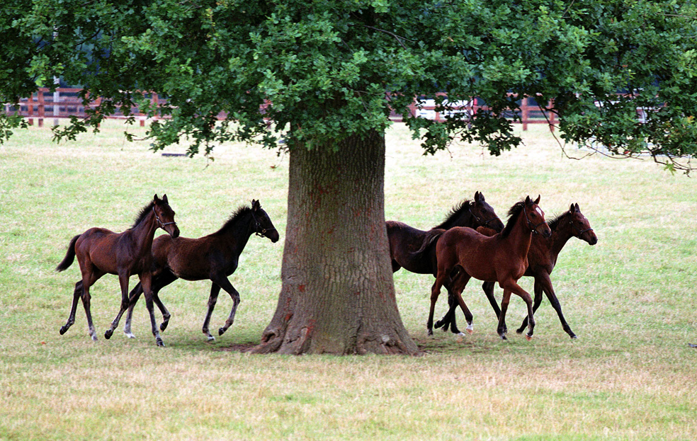 Discover Newmarket announce exclusive tour to world-renowned Stud